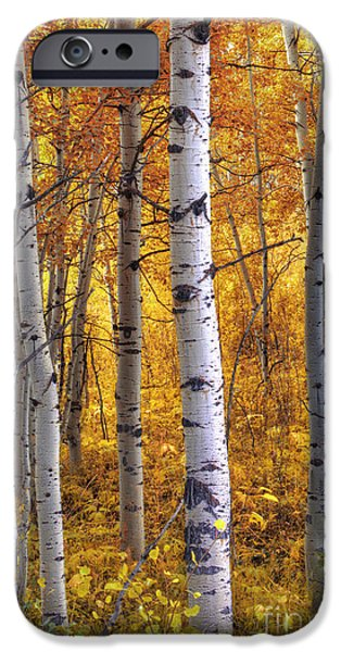 Fall Foliage iPhone Cases - Amber Aspens iPhone Case by Marco Crupi