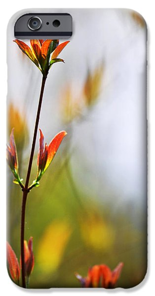 Amber Glow iPhone Case by Christina Rollo