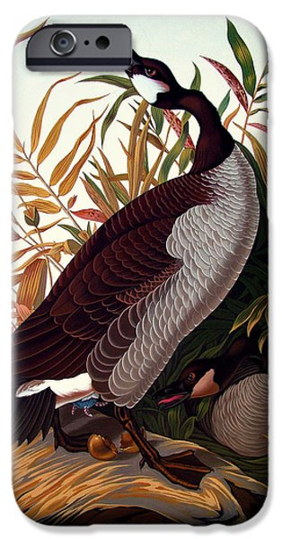 Canadian Geese Paintings iPhone Cases - America 2008 iPhone Case by Philip Slagter