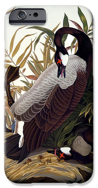 Canadian Geese Paintings iPhone Cases - America 2013 iPhone Case by Philip Slagter