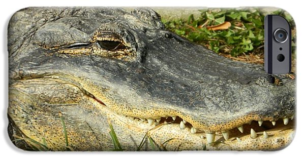 Smithsonian iPhone Cases - American Alligator - Flash Those Pearlies iPhone Case by Emmy Marie Vickers