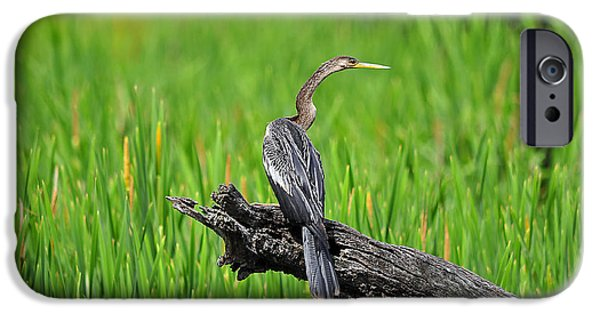 Anhinga iPhone Cases - American Anhinga iPhone Case by Al Powell Photography USA