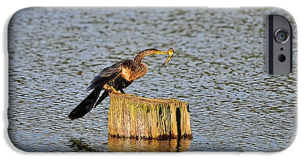 Anhinga iPhone Cases - American Anhinga Angler iPhone Case by Al Powell Photography USA