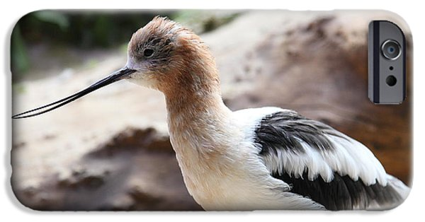 Seagull iPhone Cases - American Avocet 5D24829 iPhone Case by Wingsdomain Art and Photography