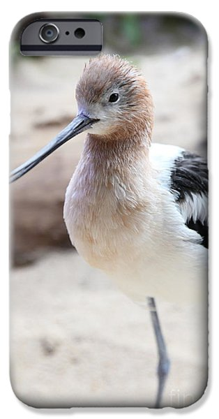 Seagull iPhone Cases - American Avocet 5D24830 iPhone Case by Wingsdomain Art and Photography