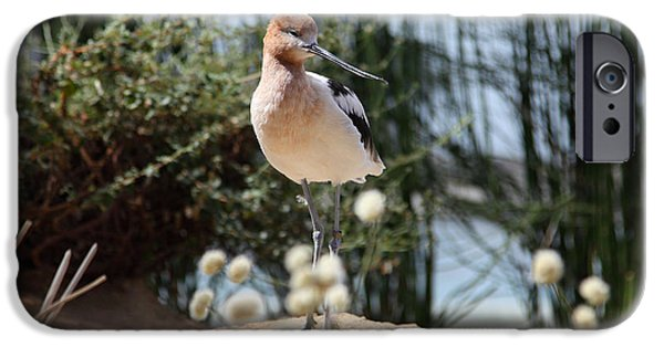 Seagull iPhone Cases - American Avocet 5D25095 iPhone Case by Wingsdomain Art and Photography