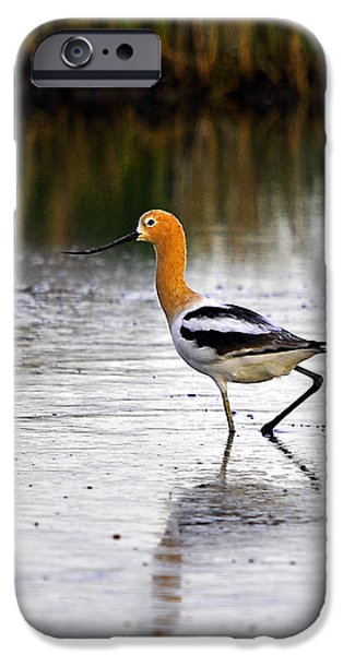 American Avocet iPhone Case by Al Powell Photography USA