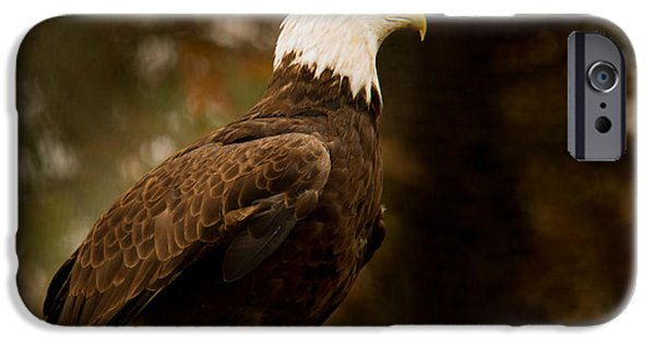 Preditor iPhone Cases - American Bald Eagle Awaiting Prey iPhone Case by Douglas Barnett