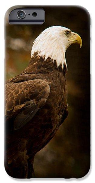 American Bald Eagle Awaiting Prey iPhone Case by Douglas Barnett