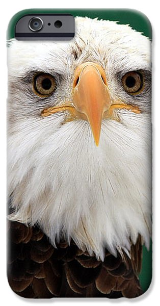 American Bald Eagle on the Look Out iPhone Case by Inspired Nature Photography By Shelley Myke