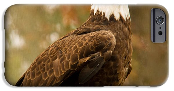 Preditor iPhone Cases - American Bald Eagle Resting iPhone Case by Douglas Barnett