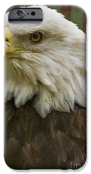 Patriotism iPhone Cases - American Bald Eagle With American Flag Background iPhone Case by Anne Rodkin