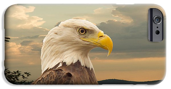Preditor iPhone Cases - American Bald Eagle with Peircing Eyes iPhone Case by Douglas Barnett