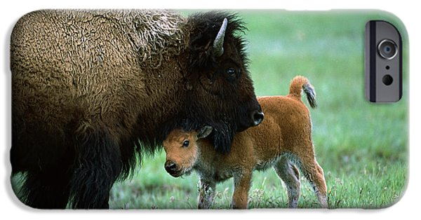 American Bison iPhone Cases - American Bison and Calf Yellowstone NP iPhone Case by Suzi Eszterhas