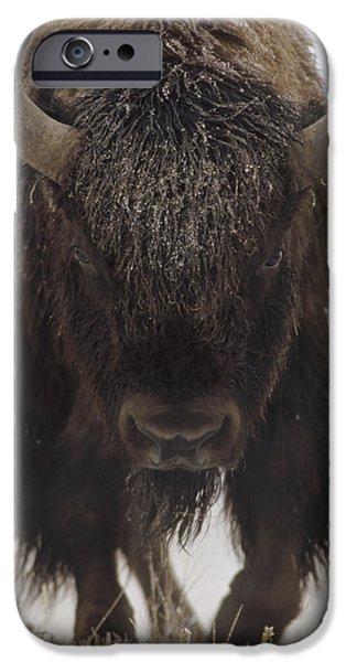 American Bison Portrait iPhone Case by Tim Fitzharris