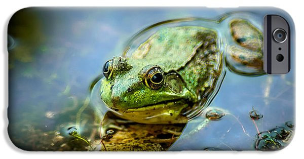 Matting iPhone Cases - American Bull Frog iPhone Case by Optical Playground By MP Ray