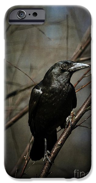 Crows Photographs iPhone Cases - American Crow iPhone Case by Lois Bryan