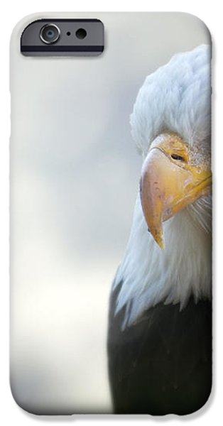 American Eagle iPhone Case by Jason Politte