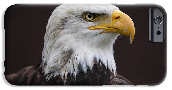 Freedom iPhone Cases - American Eagle iPhone Case by Marco Destefanis