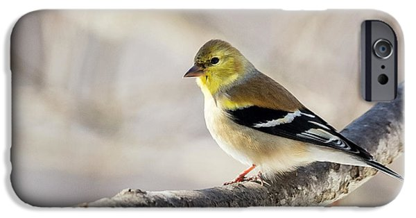 Finch iPhone Cases - American Goldfinch iPhone Case by Bill  Wakeley