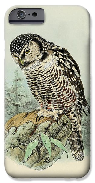 Colored Owls iPhone Cases - American Hawk Owl iPhone Case by J G Keulemans