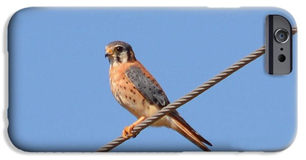 Electrical iPhone Cases - American Kestrel Falcon iPhone Case by Ruth  Housley
