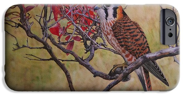 Fall In New England iPhone Cases - American Kestrel Female iPhone Case by Ken Everett