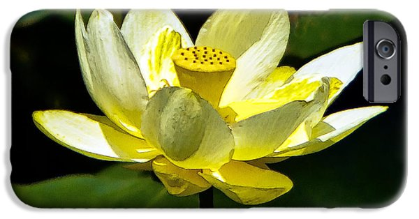 Concord Massachusetts iPhone Cases - American Lotus Flower iPhone Case by Constantine Gregory