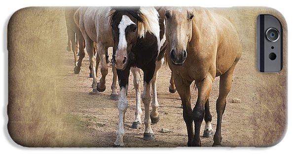 American Quarter Horse iPhone Cases - American Quarter Horse Herd iPhone Case by Betty LaRue