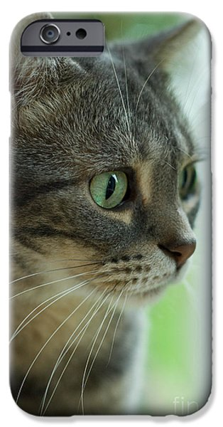 American Shorthair iPhone Cases - American Shorthair Cat Profile iPhone Case by Amy Cicconi