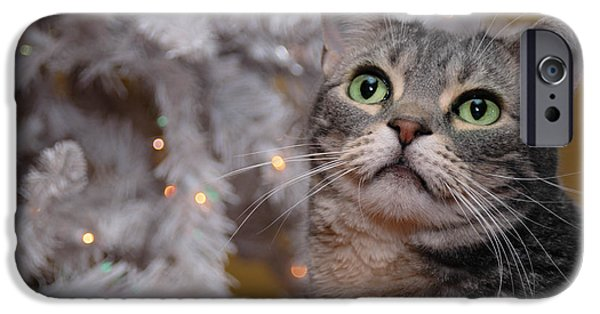 American Shorthair iPhone Cases - American Shorthair Cat with Holiday Tree iPhone Case by Amy Cicconi