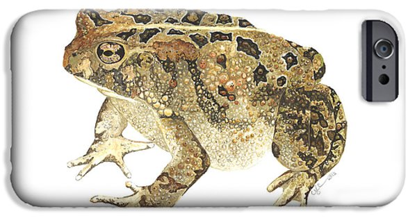 Biology Paintings iPhone Cases - American Toad iPhone Case by Cindy Hitchcock