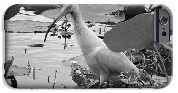 Ibis iPhone Cases - American White Ibis Black And White iPhone Case by Dan Sproul