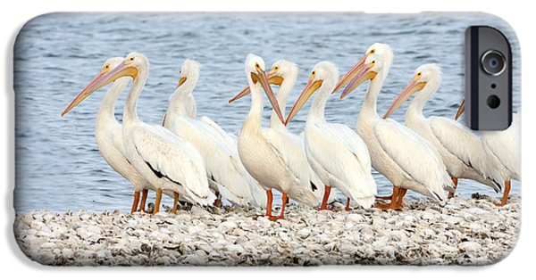 Marine iPhone Cases - American White Pelicans iPhone Case by Susan Candelario