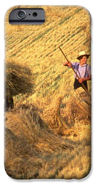 Amish boys wheat harvest  iPhone Case by Blair Seitz