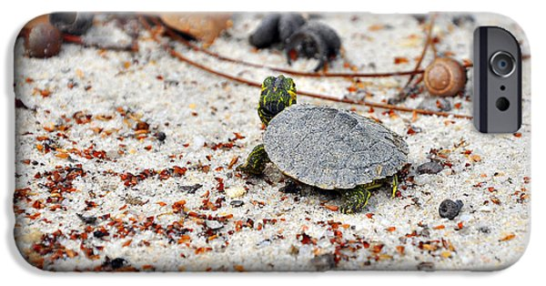 Slider Photographs iPhone Cases - Among Acorns iPhone Case by Al Powell Photography USA