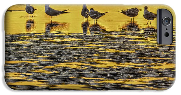 Tern iPhone Cases - Among Friends iPhone Case by Marvin Spates