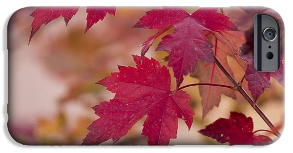 Jordan iPhone Cases - Among Maples iPhone Case by Chad Dutson