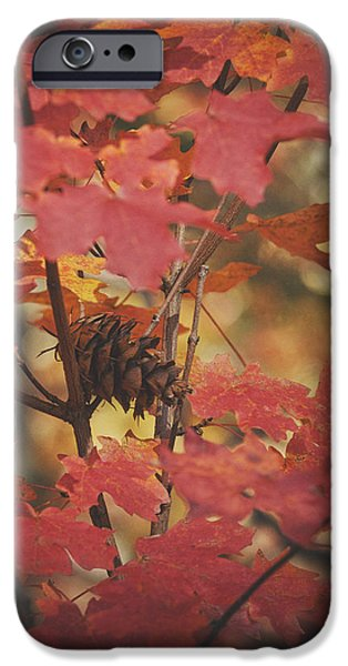 Recently Sold -  - Sedona iPhone Cases - Amongst the Maple Leaves  iPhone Case by Saija  Lehtonen