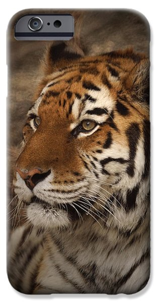 Bengal Tiger iPhone Cases - Amur Tiger 2 iPhone Case by Ernie Echols