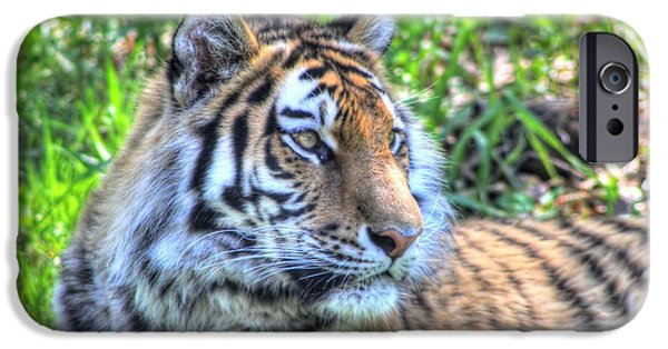 Large Cats iPhone Cases - Amur Tiger 5 iPhone Case by Jimmy Ostgard