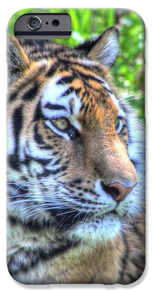 Amur Tiger 5 iPhone Case by Jimmy Ostgard