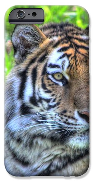 Amur Tiger 6 iPhone Case by Jimmy Ostgard
