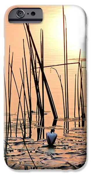 Rucker iPhone Cases - An Alabama Sunrise iPhone Case by JC Findley