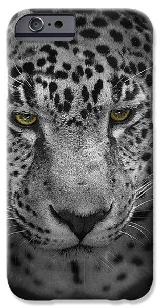 Felidae iPhone Cases - An Intense Stare - Wildlife - Leopard iPhone Case by Jai Johnson