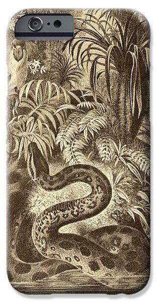 Serpent iPhone Cases - Anaconda Looking For Prey. From La Vida iPhone Case by Ken Welsh