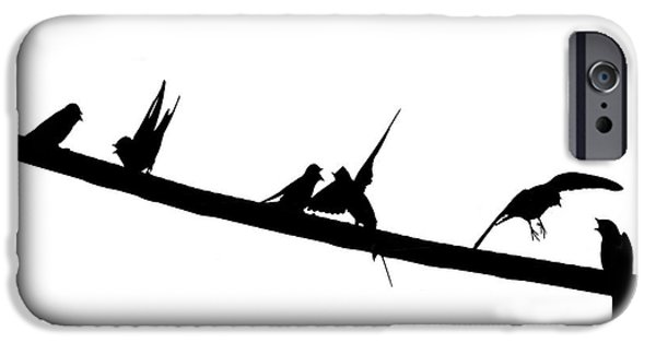 Barn Swallow iPhone Cases - Anatomy Of A Spat - Nothing is Black and White iPhone Case by Constantine Gregory