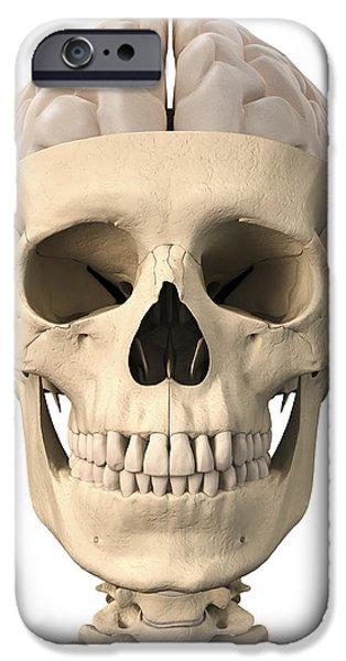 Anatomy Of Human Skull, Cutaway View iPhone Case by Leonello Calvetti