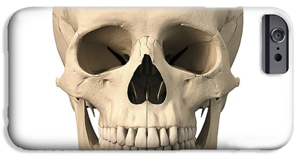 Frontal Bones iPhone Cases - Anatomy Of Human Skull, Front View iPhone Case by Leonello Calvetti