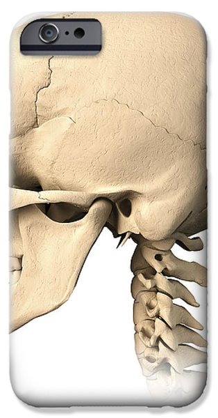 Anatomy Of Human Skull, Side View iPhone Case by Leonello Calvetti